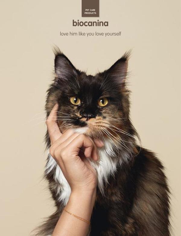 多芬品牌创意广告_史上最强宠物产品广告- 如此创意,想不疯传也难 | 华丽志