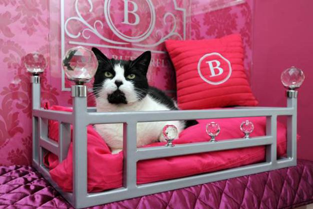 专为猫咪服务的豪华度假酒店