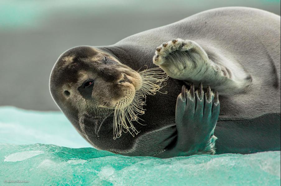2014年野生动物摄影大奖候选佳作