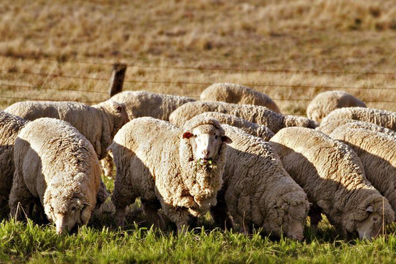 Zegna 收购澳洲羊毛场