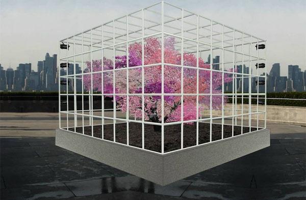 大学教授培育能产40种水果的果树纪念9-11