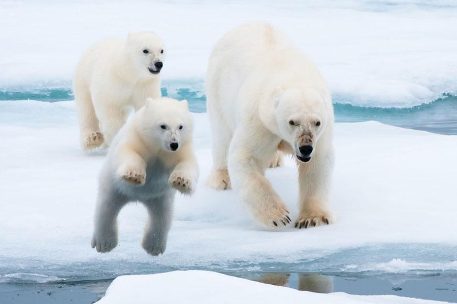 水晶邮轮开启北极探险之旅