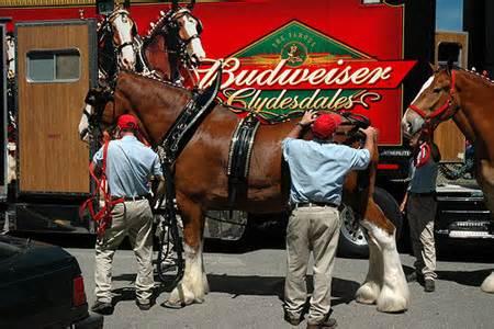 四天观看超千万次的品牌视频广告 by Budweiser