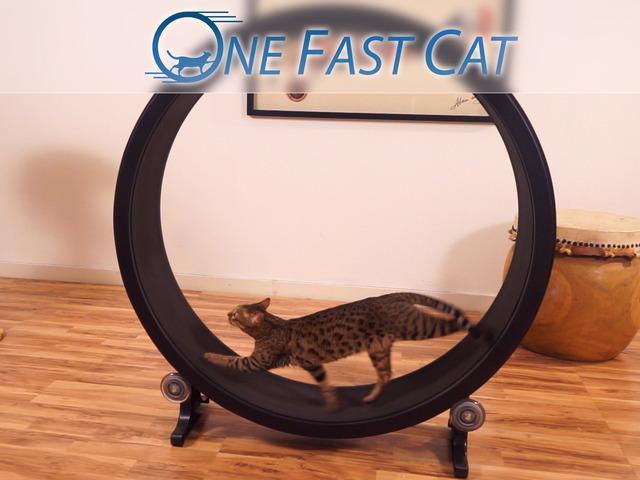 【华丽之选】猫咪快跑!One Fast Cat喵星人健身轮