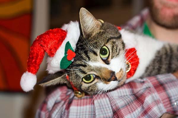 本年规模最大杠杆收购:宠物专卖店PetSmart