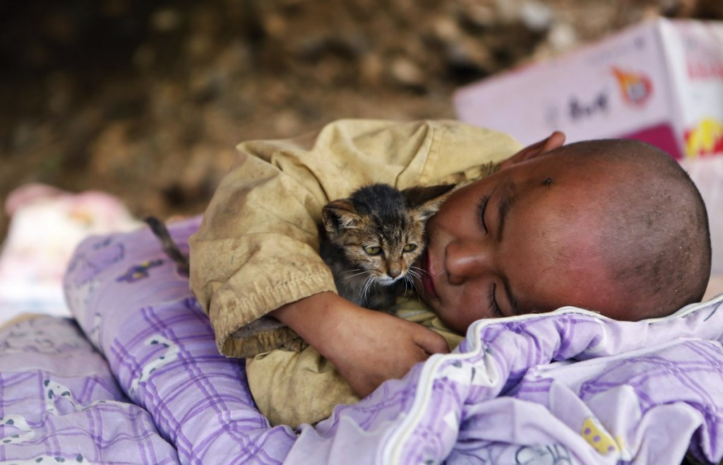 a-child-cuddling-a-cat-rests-under-a-shelter-at-the-earthquake-zone-in-ludian-county-china-on-august-5-2014-an-earthquake-in-china-that-weekend-triggered-landslides-that-killed-more-than-600-people-state-media-reported
