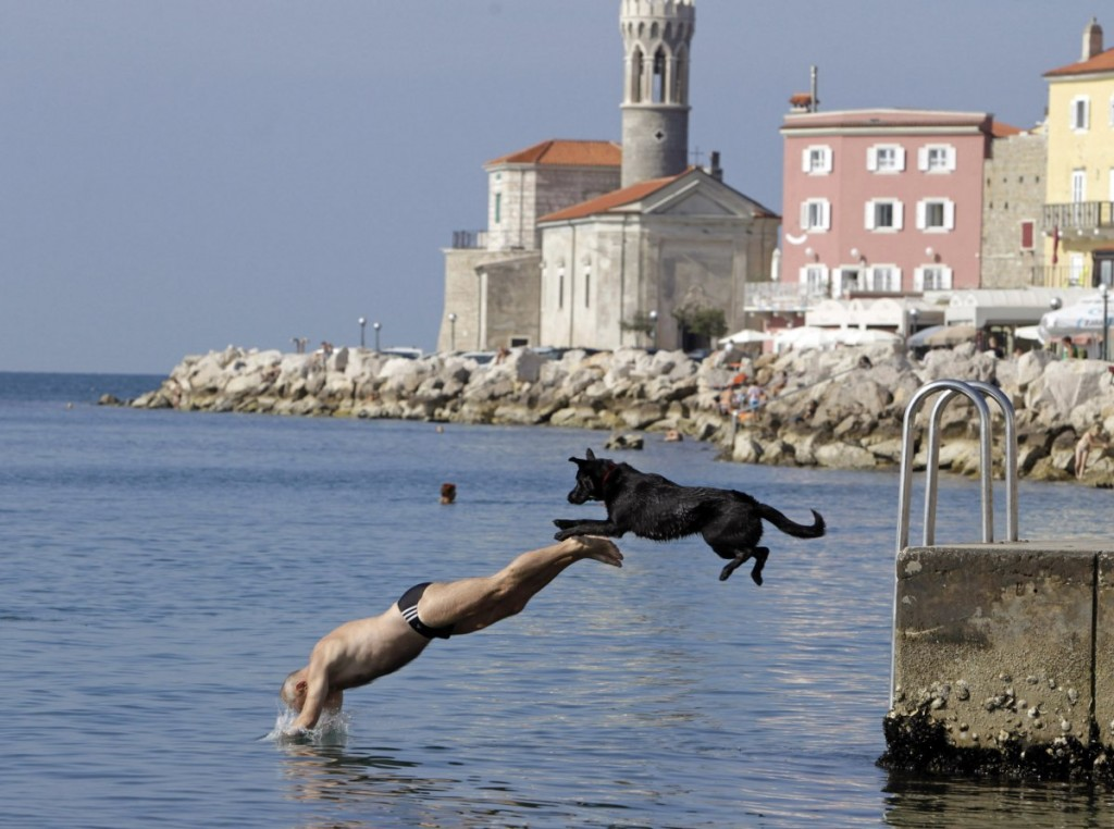 a-man-and-his-dog-jump-into-the-sea-in-piran-october-5-2014