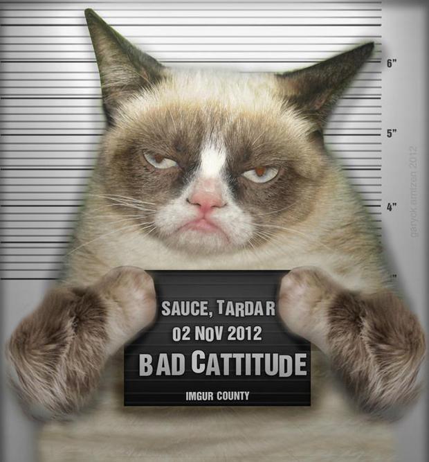 grumpy-cat-part1-2-20-092020192