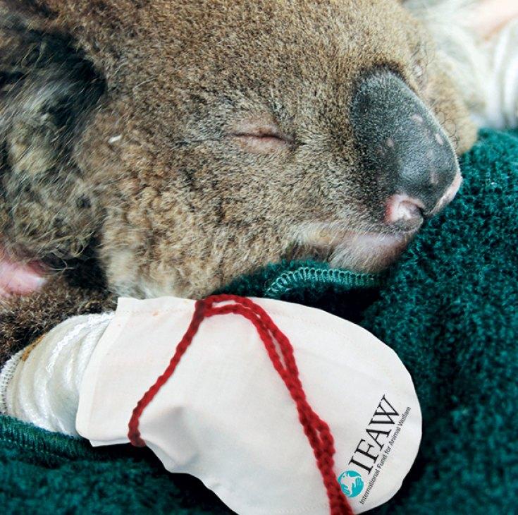 koala-mittens