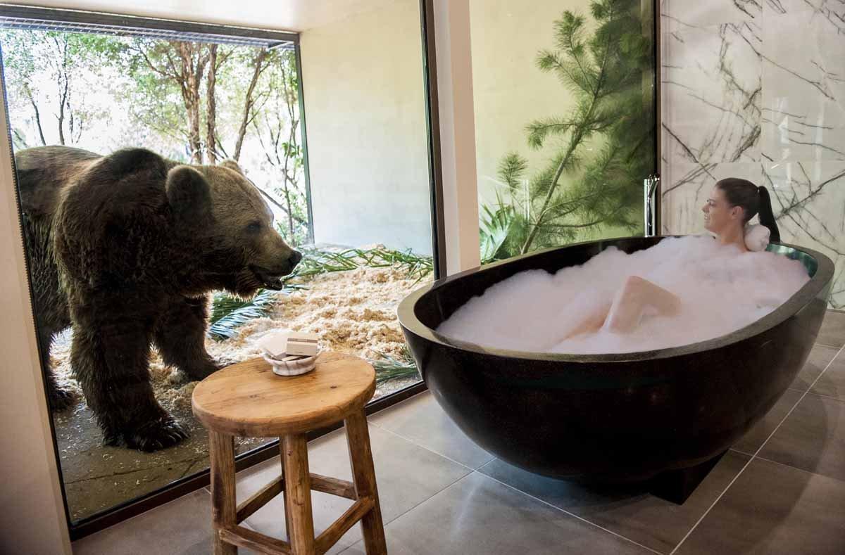 澳洲动物园内的精品酒店,让你和猛兽同吃同住