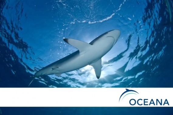 oceana-570x381