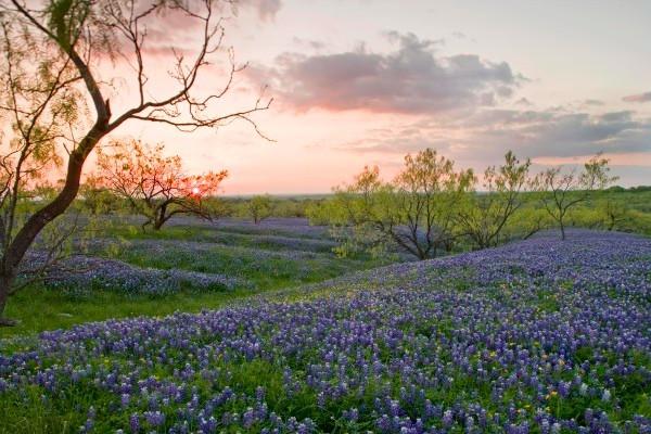全球十佳春天赏花圣地