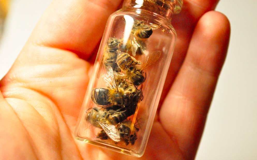 dont-worry-the-bees-in-this-vial-died-a-natural-death-and-they-can-be-yours-for-only-15