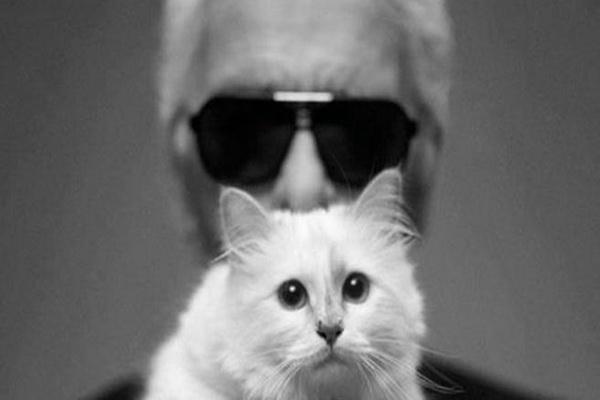 老佛爷爱猫 Choupette 年入 300万欧元,堪比超模