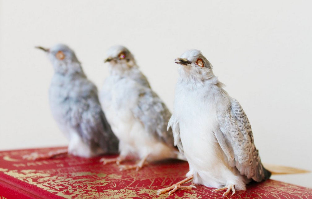 you-can-get-a-real-taxidermy-bird-with-rhinestone-eyes-for-200