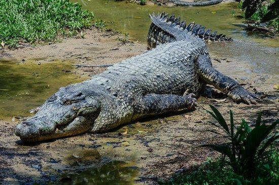 美国善待动物组织 PETA 宣称 Hermès 两家鳄鱼皮供应商涉嫌虐待动物