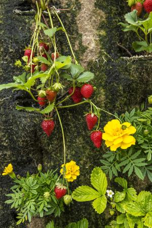 paris-sous-les-fraises-galeries-lafayette-haussmann-4