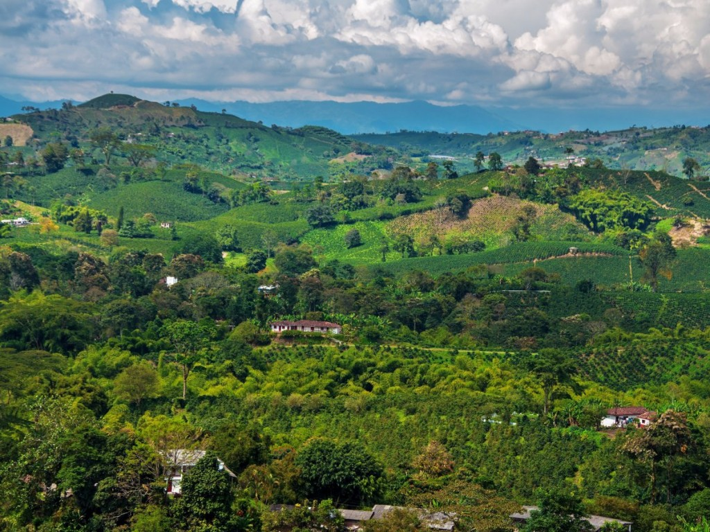 colombian-coffee-is-said-to-be-the-best-in-the-world--unesco-declared-its-mountainous-coffee-growing-regions-a-world-heritage-site-in-2011-the-eje-cafetero-or-zona-cafetera