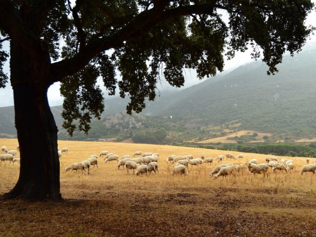pecorino-romano-a-hard-and-salty-italian-cheese-is-one-of-italys-oldest-the-sardinia-native-cheese-is-made-from-sheeps-milk-and-was-already-a-diet-staple-in-ancient-rome-es