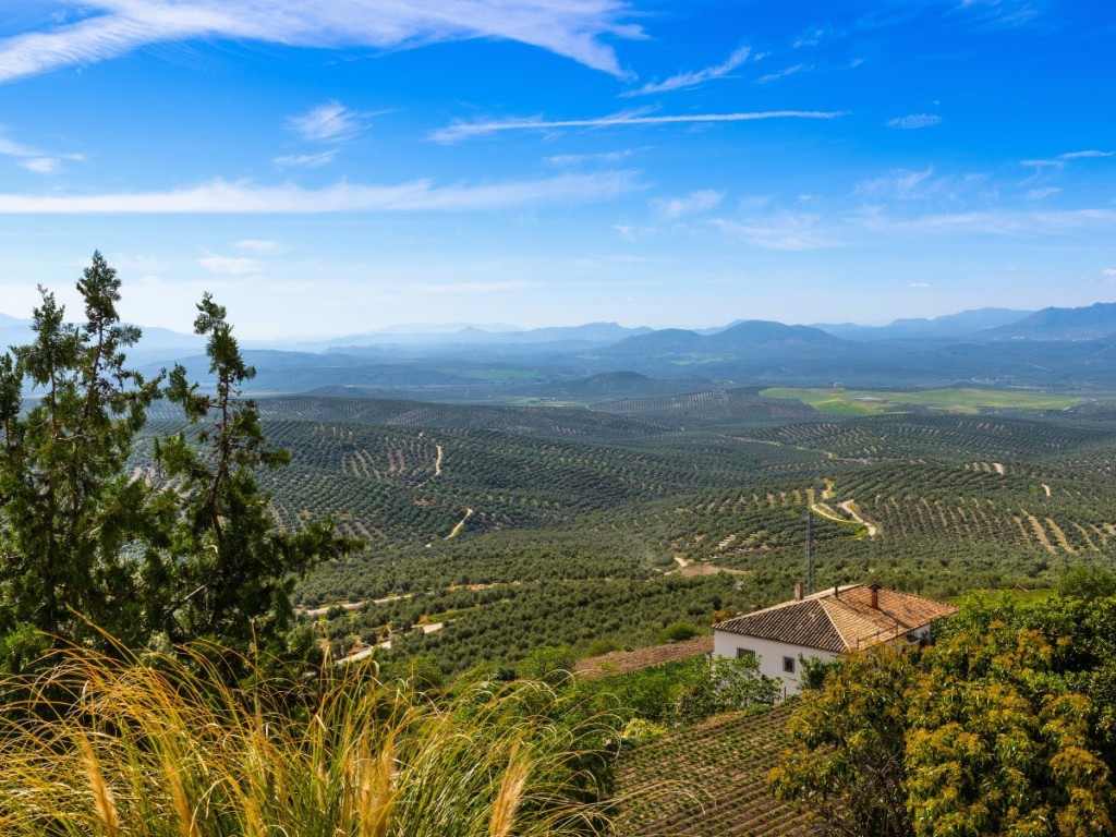 spain-is-the-worlds-largest-producer-of-virgin-olive-oil-and-20-of-the-worlds-entire-supply-is-produced-in-jan-andalucia-visit-the-va-verde-del-aceite-olive-oil-greenway-in