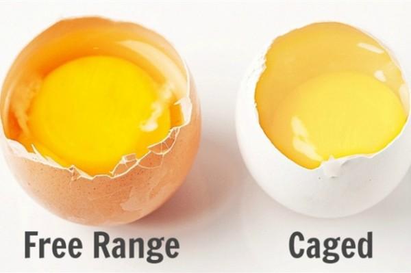 """麦当劳宣布将在美国加拿大全面采用""""无笼放养鸡蛋"""",这意味着什么?"""