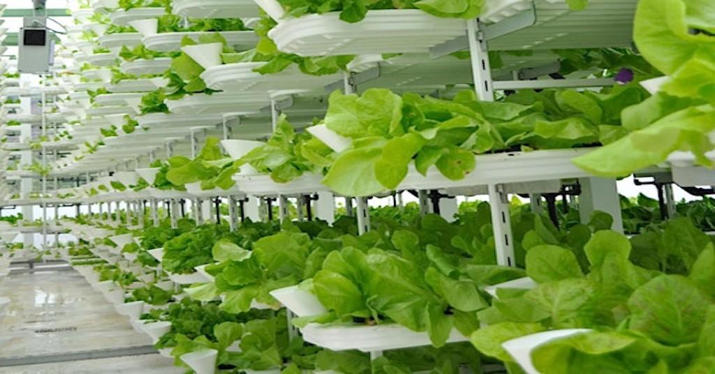 101182633-vertical-farm.1910x1000