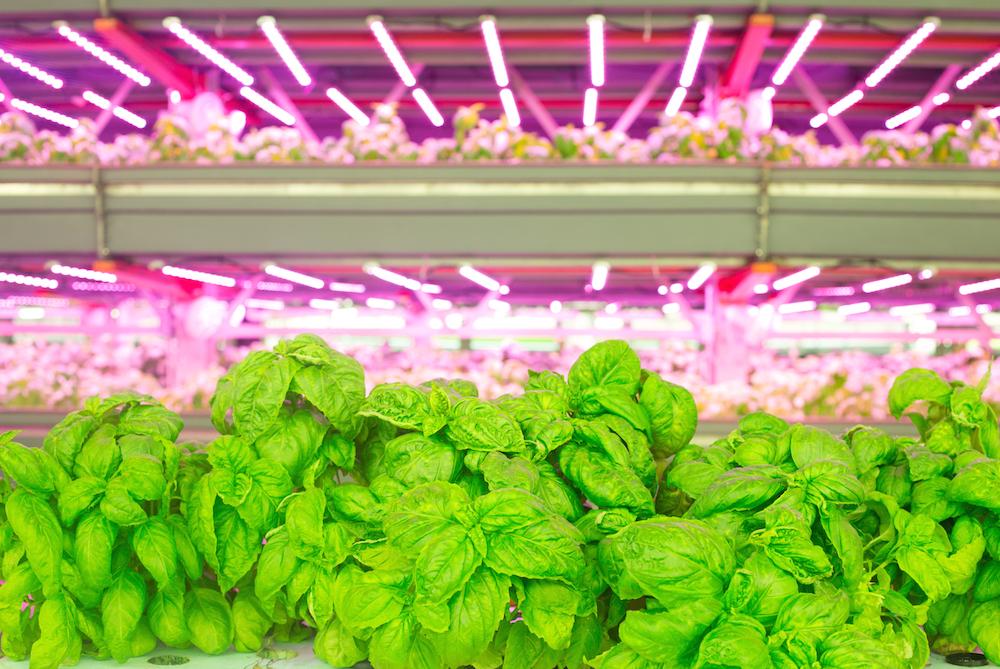 一年可收获 15季!北美最大室内垂直农场 FarmedHere