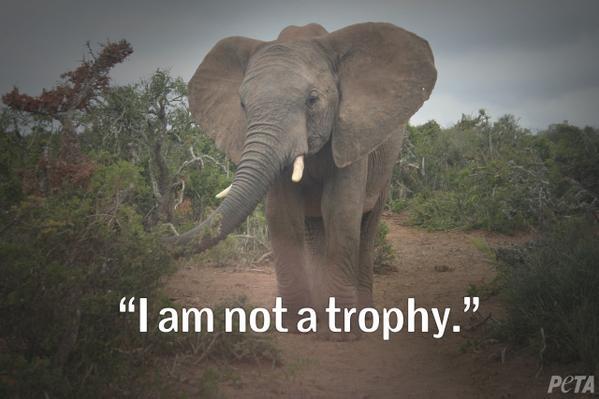 Oscar de la Renta 用大象皮做鞋?激进动物保护组织 PETA 这回抓错人了!