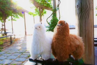 【华丽集 · 轻专访】羊驼故事:你不知道的关于羊驼时尚的那些事儿