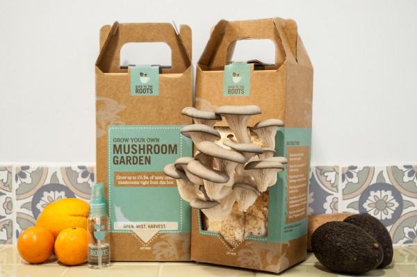 加州初创食品公司Back to the Roots完成500万美元种子轮融资