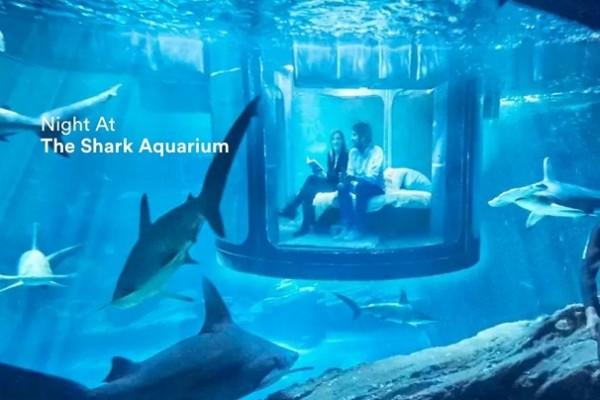 Airbnb 又出大招,邀你与鲨鱼共度一晚