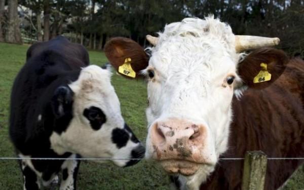 中国奶粉囤积过多,新西兰乳业陷入绝境,85%牧场亏损!