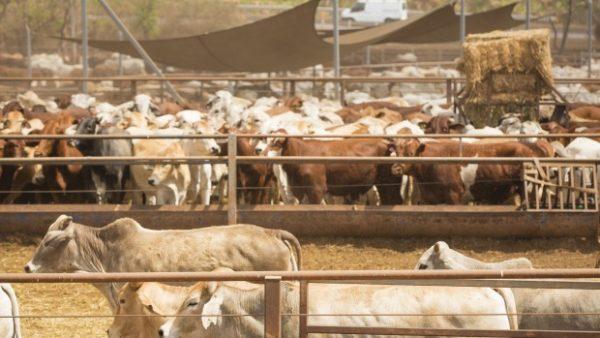 两家中国公司 3.7亿澳元收购澳洲牧场 Kidman,总面积与韩国国土相当