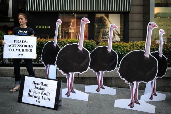 美国善待动物组织 PETA 入股 Prada,意在制止鸵鸟皮制品销售!
