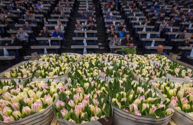 荷兰这家百年历史的鲜花行业巨无霸公司,年收入 45亿欧元!