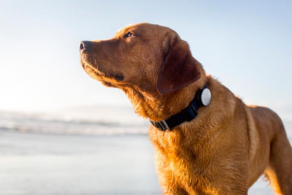 玛氏集团收购狗用智能项圈 Whistle,传金额达 1.17亿美元