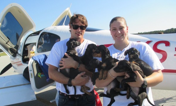 Lorenzo-Borghese-with-puppies-640x360