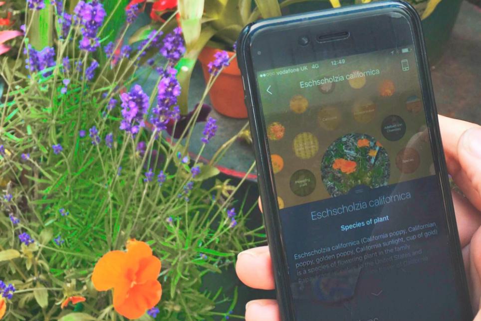 """模拟人类思考过程,""""视觉浏览器""""Blippar App 新增花朵识别功能"""