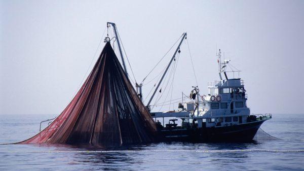继续海产业的垂直整合,Blue Harvest 收购海鲜经销商 Hygrade
