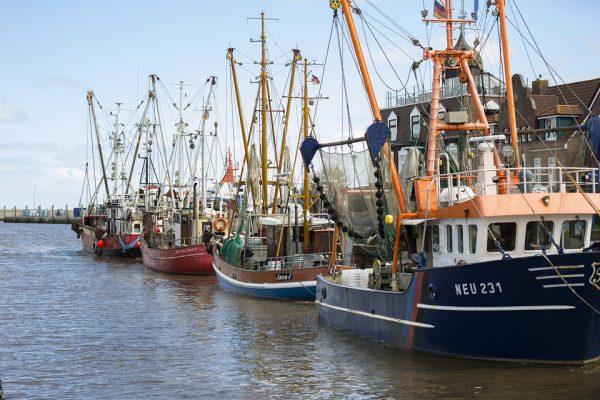 打击过度捕捞!Google 参与研发的Global Fishing Watch 实时追踪船舶捕鱼活动