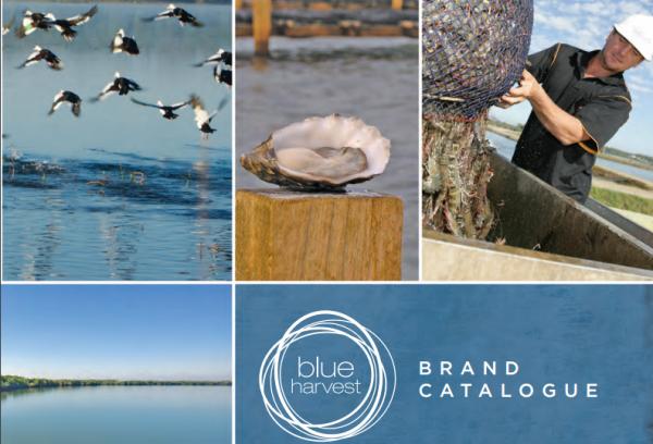 私募基金支持的 Blue Harvest 继续海产品垂直整合,收购 High Liner 扇贝业务
