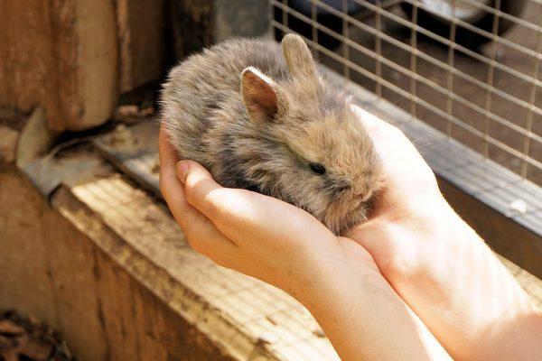 欧盟法庭重申:无论测试地点在哪里,都不准销售经动物测试的美妆产品