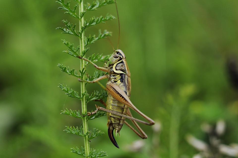 把蟋蟀变成宠物的优质食品!加拿大女性创业企业Midgard Insect Farm成功融资