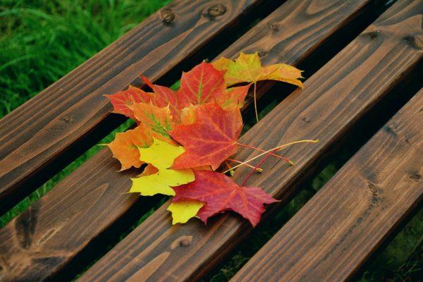 芬兰科学家研发的树叶加工技术取得新突破:落叶提取物将可染发,可当保健品食用