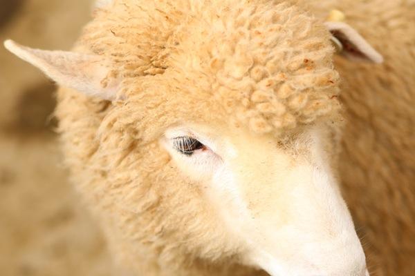 瑞典高端户外品牌 Fjällräven计划从瑞典本地采购羊毛,确保供应链可追溯