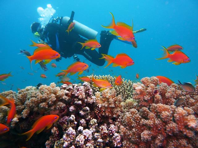 探索神奇海洋物种的好去处,盘点全球八大潜水胜地