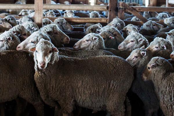 让羊毛服装也能机洗!Zegna创意总监披露:正研发一种结合纳米技术的抗皱羊毛新面料
