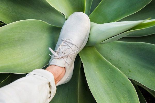 """号称""""史上最舒服""""的羊毛运动鞋""""Allbirds 推进地面零售布局"""