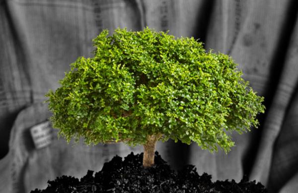 贝恩资本旗下专注公益环保型企业的基金 Bain Capital Double Impact 完成头两笔投资
