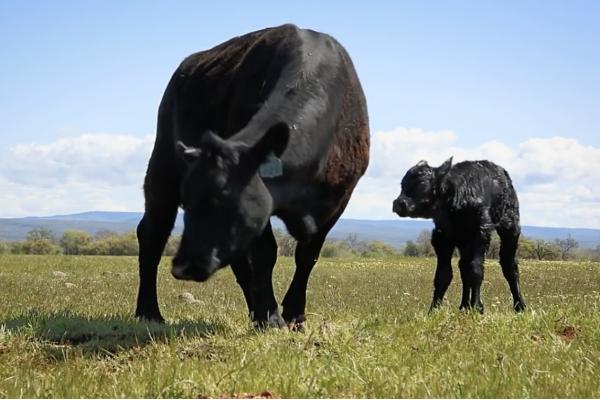 美国有机肉类家禽市场创新高!刚收购 Whole Foods 的亚马逊约见有机草饲肉类牧场主